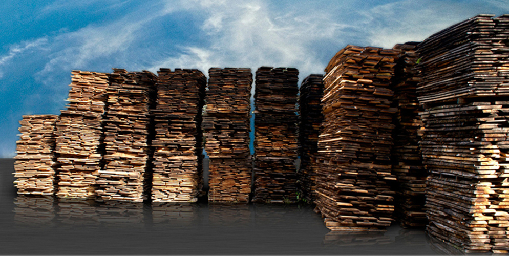 Segati in legno di olivo