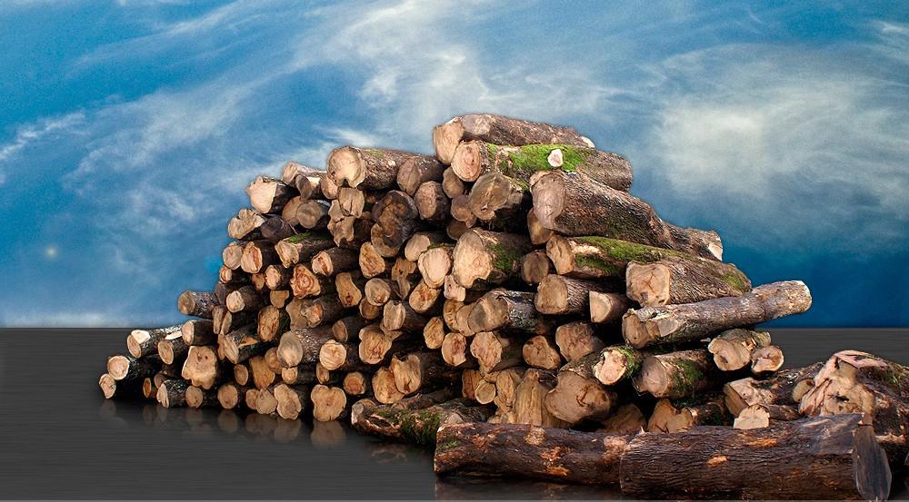 Tronchi legno di olivo