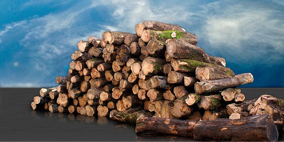 Tronchi di legno di olivo